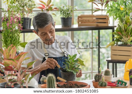 Senior asian retirement old man in casual outfit doing a hobby with happy and relax gardening tree plant in greenhouse garden farm Royalty-Free Stock Photo #1802451085