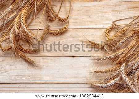 Rye grain. Whole, barley, harvest wheat sprouts. Wheat grain ear or rye spike plant on wooden texture or brown natural cotton background, for cereal bread flour. Rich harvest Concept. #1802534413