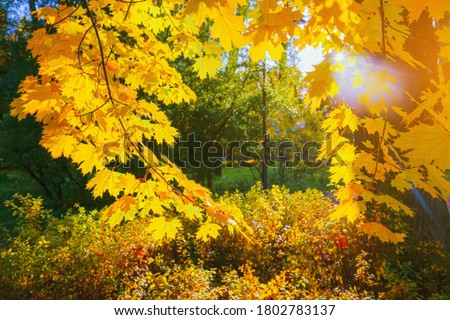 Autumn yellow leaf closeup. Bright orange autumn tree. Blur bokeh on background. Golden color flora in park. Light sunny october day. Shiny red fall leaves in garden Sun in sky. Change of fall nature