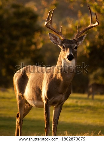The deer is looking very beautiful with his horns. wild life deer picture.