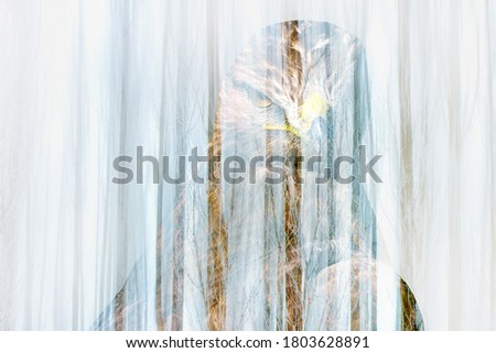 Surreal picture of nature. Abstract images. Portrait of hawk.