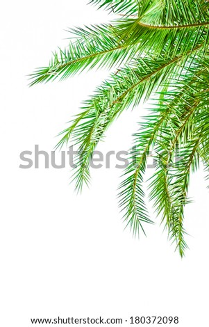 Leaves of palm tree isolated on white background. #180372098