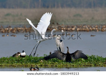 Five Different Bird Species In One Frame Royalty-Free Stock Photo #1803949213