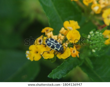 close up insect pictures. Are they: bee, beetle and ladybug