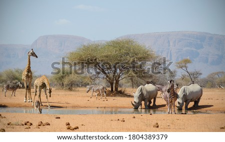 Safari view on drive in South Africa Royalty-Free Stock Photo #1804389379