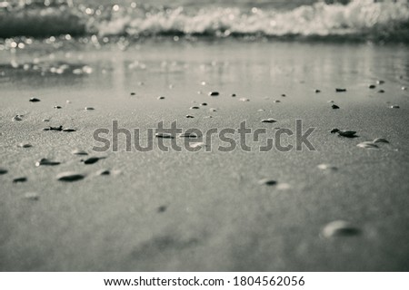 blurry black and white North Sea background with shells and surf
