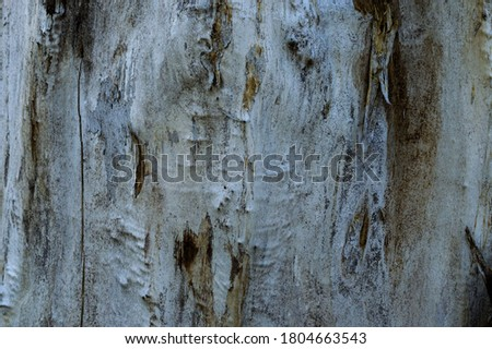 Willow bark as texture. Extraordinary background, screensaver. Nature design. Old willow tree trunk with bark, flattened, with cracks in texture. Natural wood background. Macrophoto