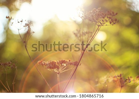 The soft golden glow of sunset light illuminates the plant, bokeh effect on the background, backlight, soft defocus, light glare, blurred golden yellow background, photo for an interior painting,calm