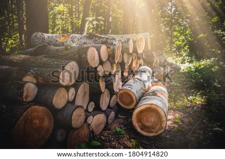 Log trunks pile, the logging timber forest wood industry. Banner or panorama of wood trunks timber harvesting in forest. Wood cutting in forest. #1804914820