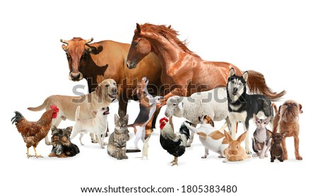 Collage with horse and other pets on white background. Banner design Royalty-Free Stock Photo #1805383480