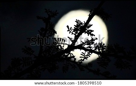 His picture of the moon of the moon with tingian