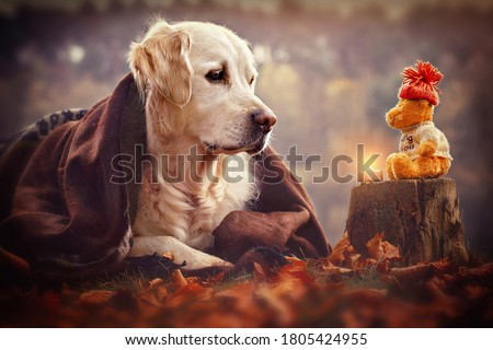 Cute dog lies outside with a blanket and looks at his teddy bear #1805424955