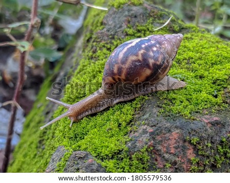 Snail. A snail is, in loose terms, a shelled gastropod. The name is most often applied to land snails, terrestrial pulmonate gastropod molluscs. Royalty-Free Stock Photo #1805579536
