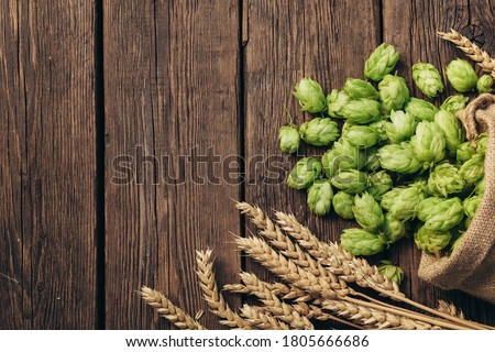 Beer brewing ingredients, hops, and wheat ears on a wooden cracked old table. Beer brewery concept. Hop cones and wheat closeup. Sack of hops and sheaf of wheat on vintage background. #1805666686