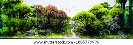 close up image of underwater landscape nature forest style aquarium tank with a variety of aquatic plants inside.