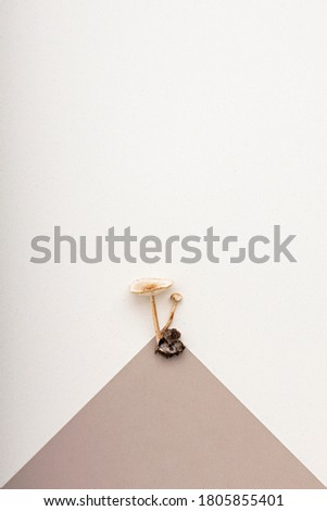 Set of fresh forest mushrooms isolated on pastel background with paper card note. Minimal fall concept. Flat lay view.