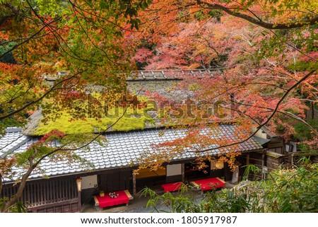 idyllic landscape of Arashiyama in Kyoto, Japan in autumn season