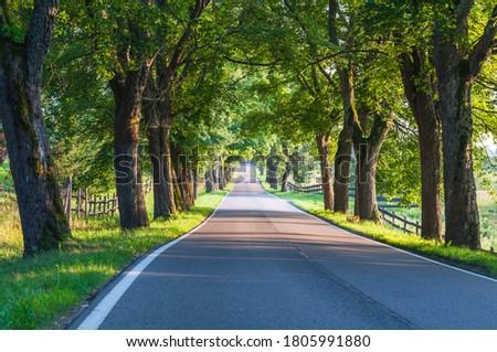 Avenue of old linden trees in Masuria; Poland  Royalty-Free Stock Photo #1805991880