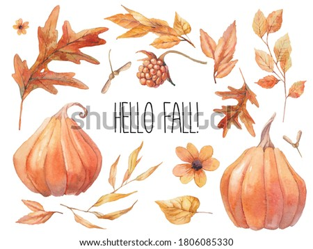 Hello fall! Watercolor autumn elements set isolated on white background: pumpkins, plants, flowers, leaves