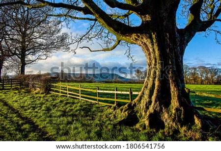Farm fence tree trunk view. Tree trunk view. Od tree trunk #1806541756