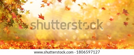 autumn tree in idyllic beautiful blurred autumn landscape panorama with fall leaves in sunshine, advertising space on leaf ground, day outdoors in golden october Royalty-Free Stock Photo #1806597127