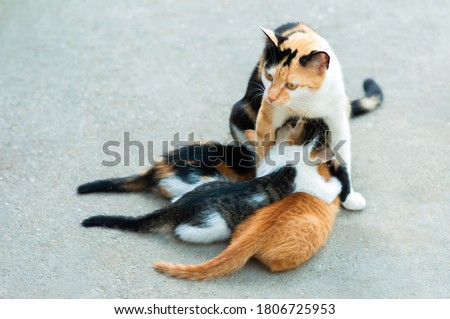 Three colored kitties at lunch, lying down, with mother cat standing Royalty-Free Stock Photo #1806725953