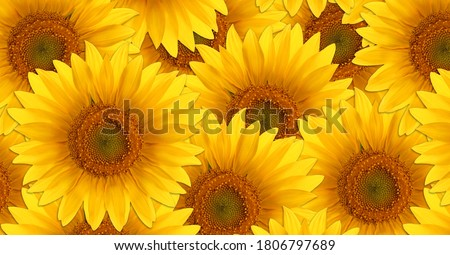 Pattern of sunflower flowers. Bright yellow summer flowers.