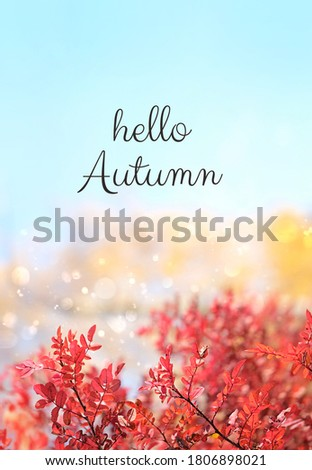 Hello Autumn. autumn nature background with red leaves. fall season concept. Royalty-Free Stock Photo #1806898021