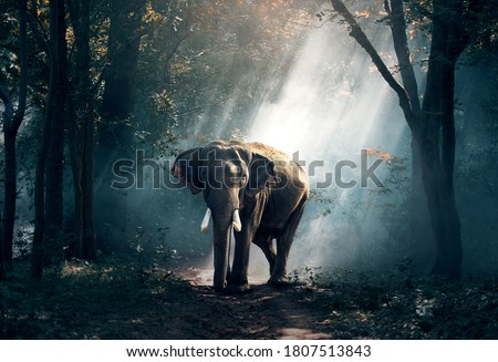 Asian elephant in the jungle #1807513843