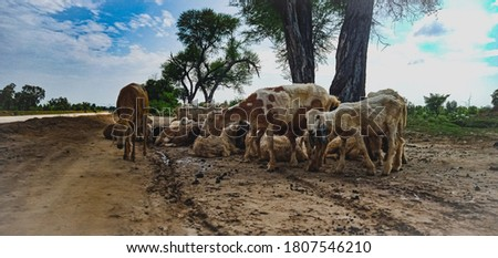 picture of goats and sheep