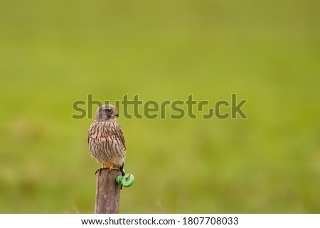 Beautiful picture of the Falcon sitting on the wood in my house garden with blurry background. selective focus.