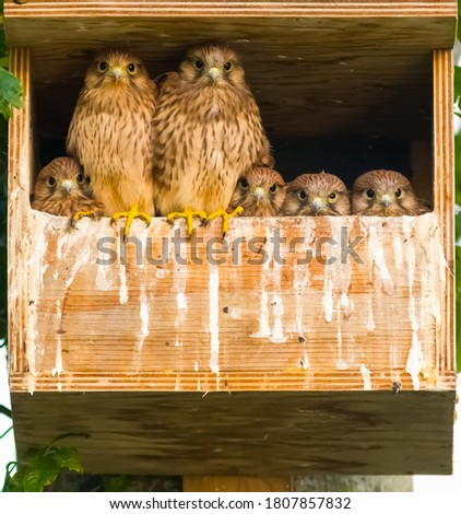 Beautiful picture of falcons with blurry background. selective focus