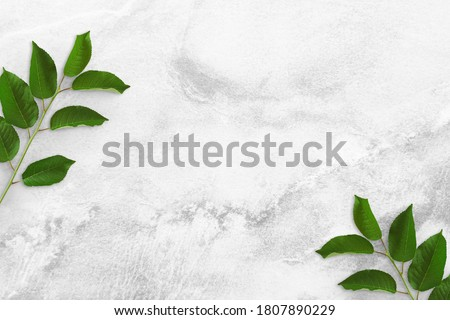 Two tree branches with green leaves at the edges on a concrete table. Old white and gray concrete background. Advertising board, poster mockup for your design. Flat lay, top view, copy space #1807890229