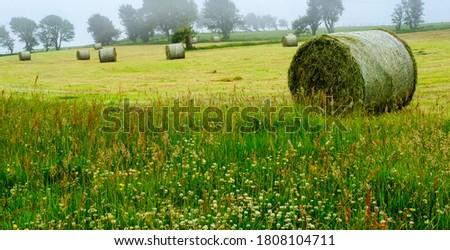 Countryside , round hay bales in a field on a misty day, with foreground of wild grass area with clover and buttercups.   Royalty-Free Stock Photo #1808104711