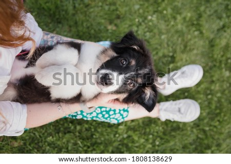 Little dog with owner spend a day at the park playing and having fun Royalty-Free Stock Photo #1808138629