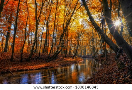 Autumn forest river sunbeam scene. Sunbeam in autumn forest. Forest river creek in autumn fall. Autumn fall forest river landscape #1808140843