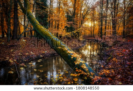 Autumn forest river creek view. Creek in autumn forest sunset. Autumn water in forest #1808148550