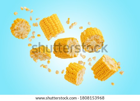 Broken flying sweet corn cob with grains on blue. Design element for product label, catalog print. #1808153968