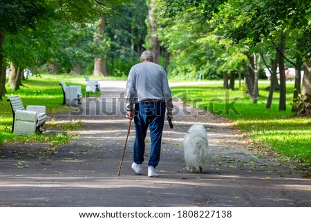 An elderly tall stooped man with a stick walks through the park with a dog on a leash. View from the back Royalty-Free Stock Photo #1808227138