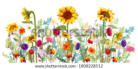 Horizontal autumn's border: sunflowers, aster, thistles, gerbera, marigold, daisy flowers, small green twigs on white background. Digital draw, illustration in watercolor style, panoramic view, vector Royalty-Free Stock Photo #1808228512