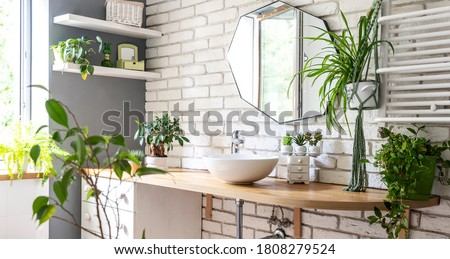 Interior of bathroom with mirror on a white bricky wall, stylish furniture, trendy wash basin and green plants. Houseplant and sp at home. Panoramic. Royalty-Free Stock Photo #1808279524