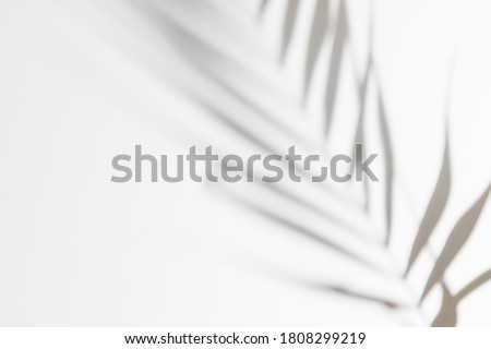 Abstract white clean background with shadow from palm or monstera leaves. Gray shadow photo overlay. Tropical tree leaves. Black and white blurred texture with copy space and mockup.