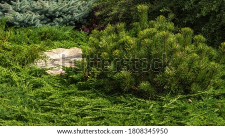 Fragment of a decorative alpine slide, landscape design - rockery with conifers, alpine grasses, stones and large pebbles Royalty-Free Stock Photo #1808345950
