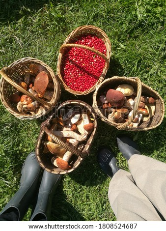 Foots and baskets for mushrooms. Full baskets before the walking in the forest. Picture after the mushroom picking. Forest autumn time.