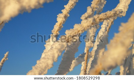 Macro shot of ice crystals on the grass against the blue sky. Russia. #1808529298