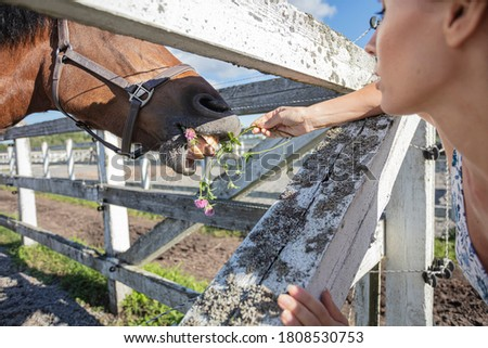 Woman feeding grass to a horse, outdoors, close-up, cropped photo, Concept, animal feeding, #1808530753