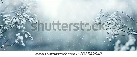 Panorama of snow-covered branches of dry grass during a snowfall, copy space Royalty-Free Stock Photo #1808542942
