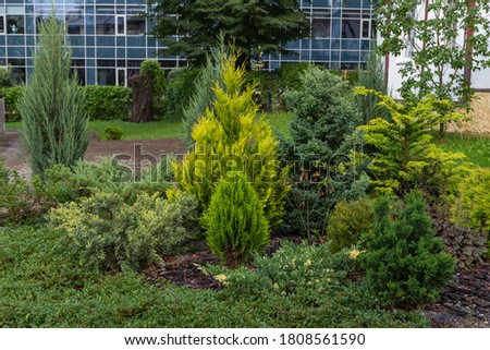 Modern garden design Coniferous plants in the garden.  An example of landscaping from coniferous ornamental plants. Royalty-Free Stock Photo #1808561590