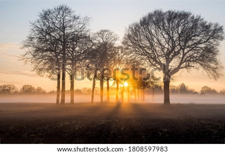 Sunrise fog on rural field trees. Sunrise trees fog. Trees in sunrise fog. Sunrise in morning #1808597983