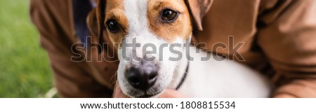 partial view of man near white jack russell terrier dog with brown spots on head, horizontal image Royalty-Free Stock Photo #1808815534